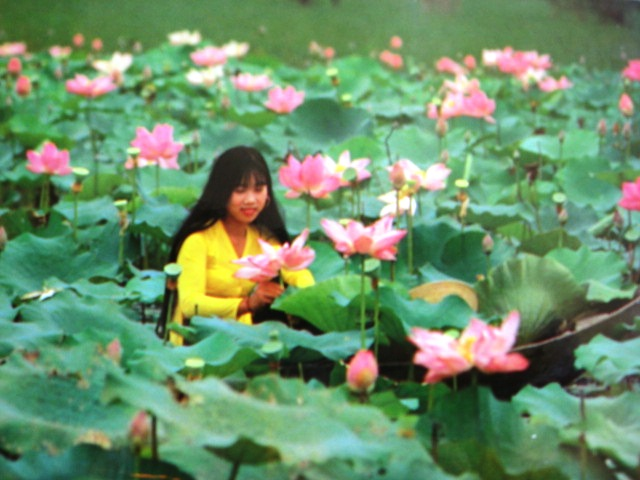 171-Lotus